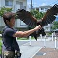 Photos: 鷹匠Tさん
