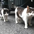 写真: シャーとチョロ