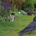 写真: 猫とカラス