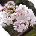 春の雨のおもひで