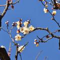 Photos: 小岩善養寺へ行って来ました
