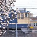 写真: 新小岩駅から