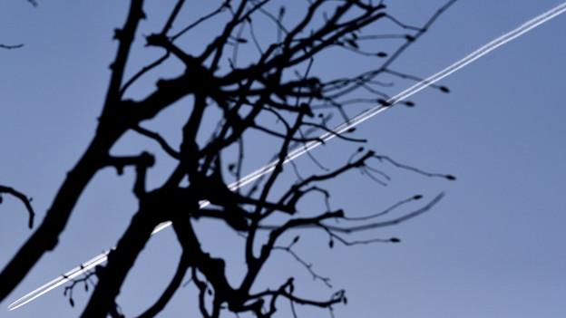 辛夷と飛行機雲