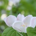 写真: 白いお花