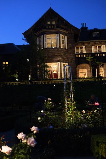 旧古河庭園 ライトアップ