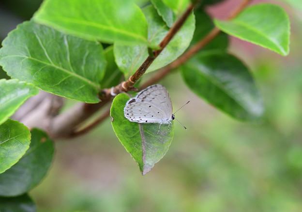 写真: 雨宿りシジミン