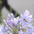 写真: 働き蜂