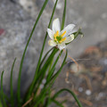 写真: 路傍に咲く