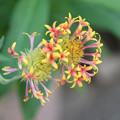 写真: 小さなお花