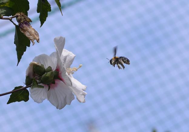 写真: 花粉だらけ