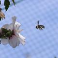 Photos: 花粉だらけ