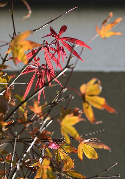 秋の先走り