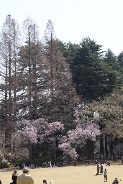 新宿御苑0327