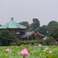 Photos: 不忍池