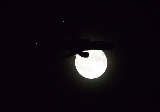 Photos: 月夜の烏