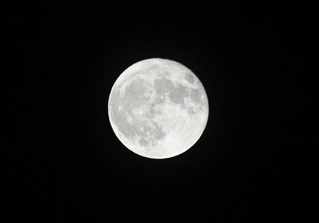 月齢15.4