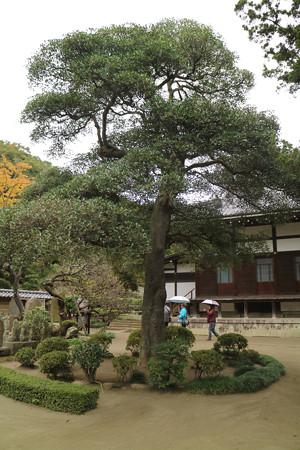円覚寺 (9)