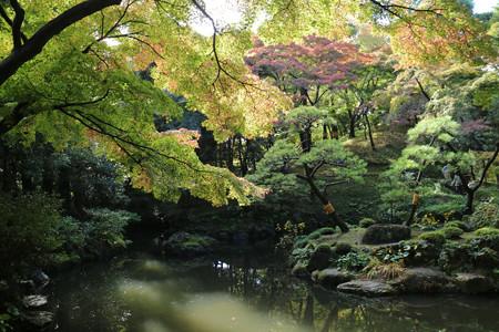 殿ヶ谷戸庭園 (8)