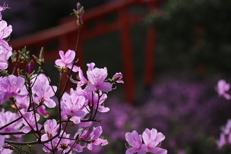 獅子崎稲荷神社 (1)