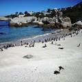 写真: 南アフリカ-23