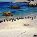写真: 南アフリカ-24