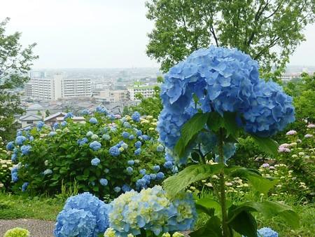 2-大乗寺丘陵公園