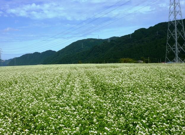 7-2018-09-13 蕎麦の花