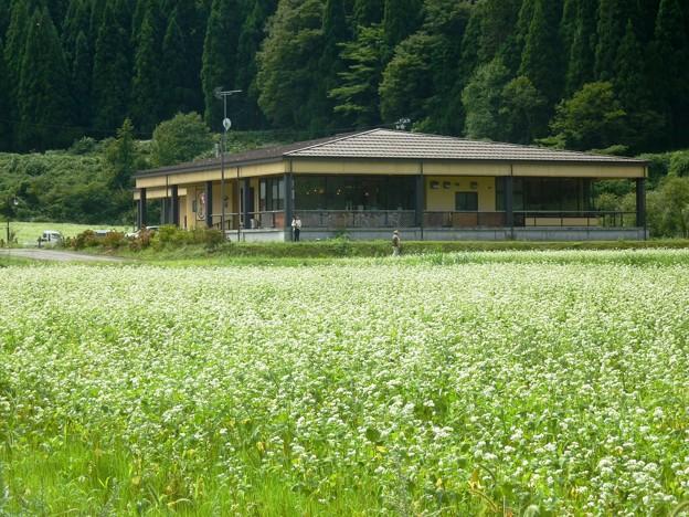 10-2018-09-13 蕎麦の花