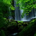 Photos: 衣の滝