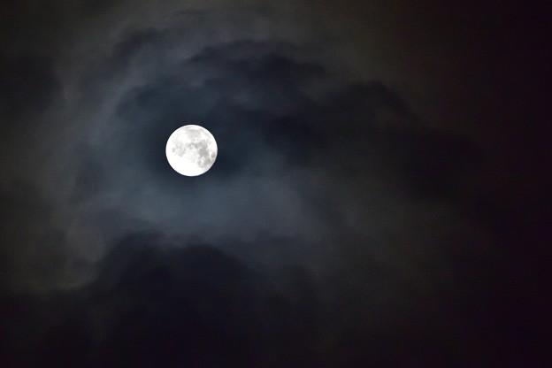 見つめる月