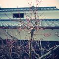 写真: KURASHIKI