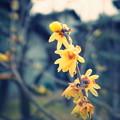 写真: HANA