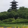 写真: 五重塔