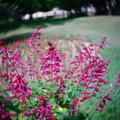 写真: 花畑