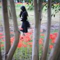Photos: 花回廊
