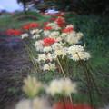 写真: 花回廊