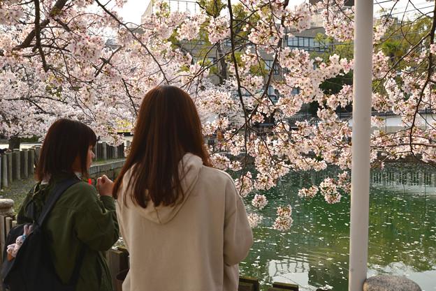 四天王寺の桜 20190404-8