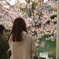 Photos: 四天王寺の桜 20190404-8