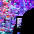 Photos: 色を写す