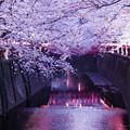 目黒川~夜桜~