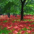 写真: 森の中の絨毯