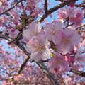 Photos: IMGP8743 春色