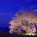 IMGP8327わに塚の桜