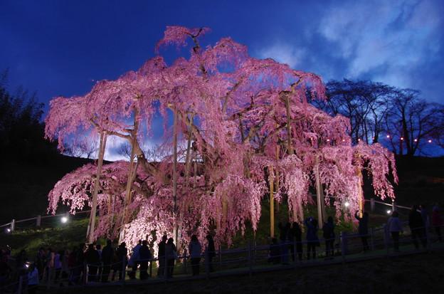 滝桜~夜景~