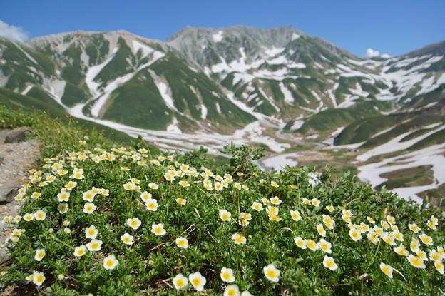 [2018年7月17日]チングルマと立山1