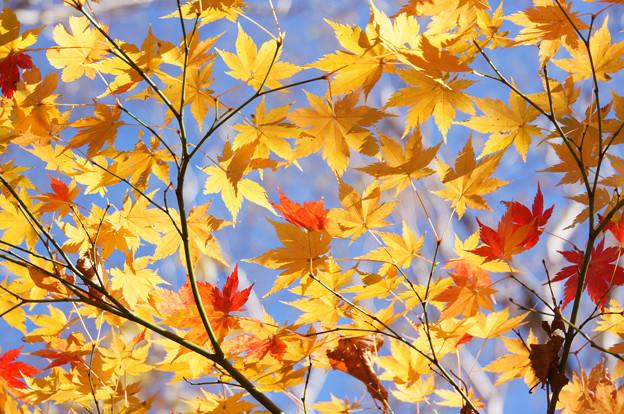 [2018年10月22日]磐梯山1