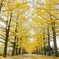 写真: [2018年11月17日]昭和記念公園