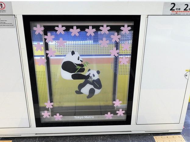 ホームドアでパンダの出逢い