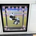 写真: ホームドアでパンダの出逢い