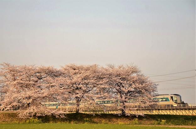 思川橋梁桜堤を行く東武500系リバティ